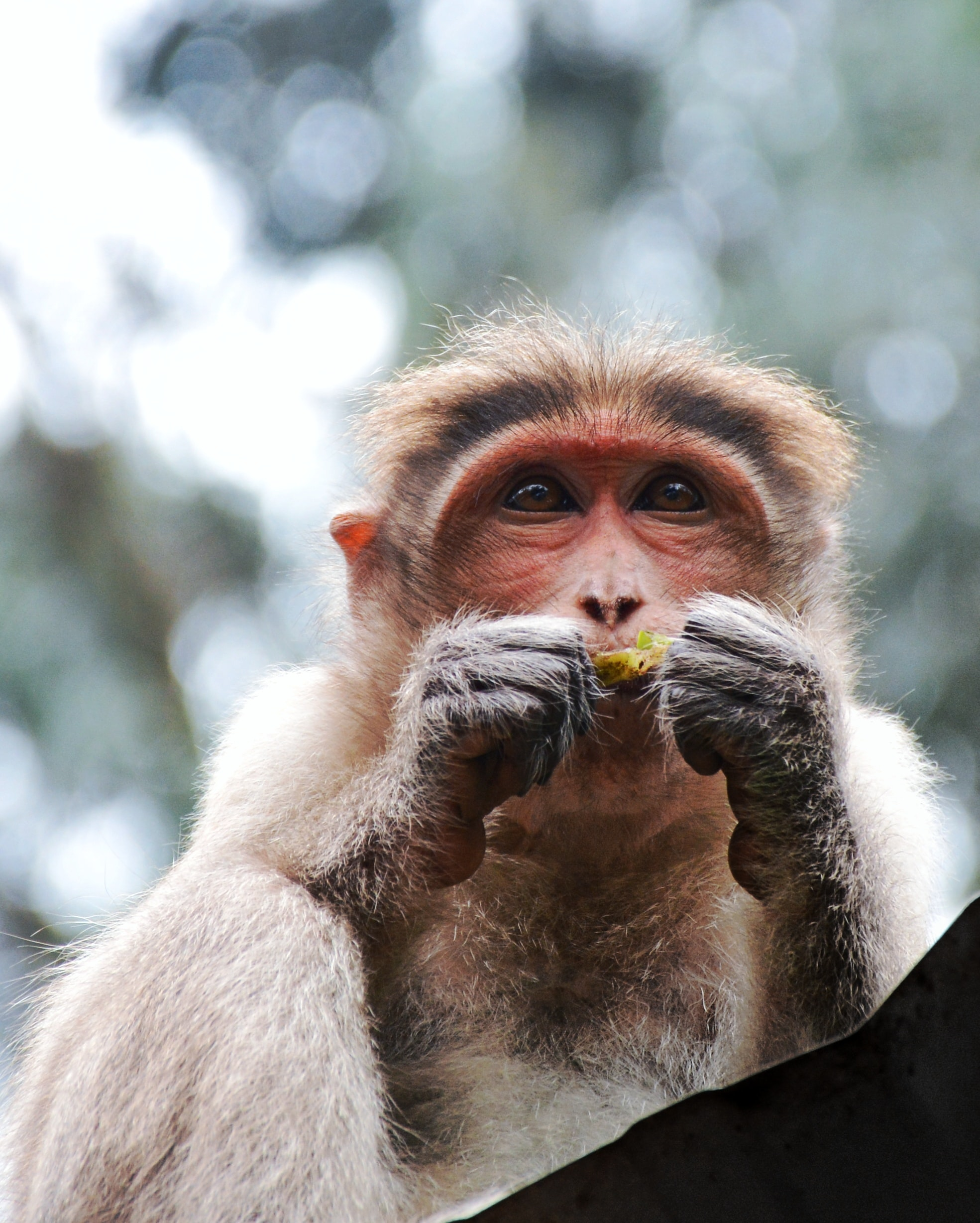 selective focus photography of primate eating