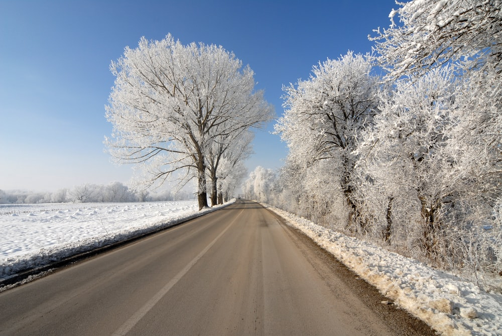 empty road in the middle of treeline
