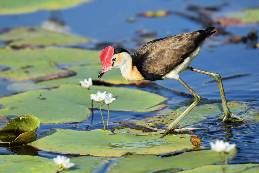 brown bird on water lily