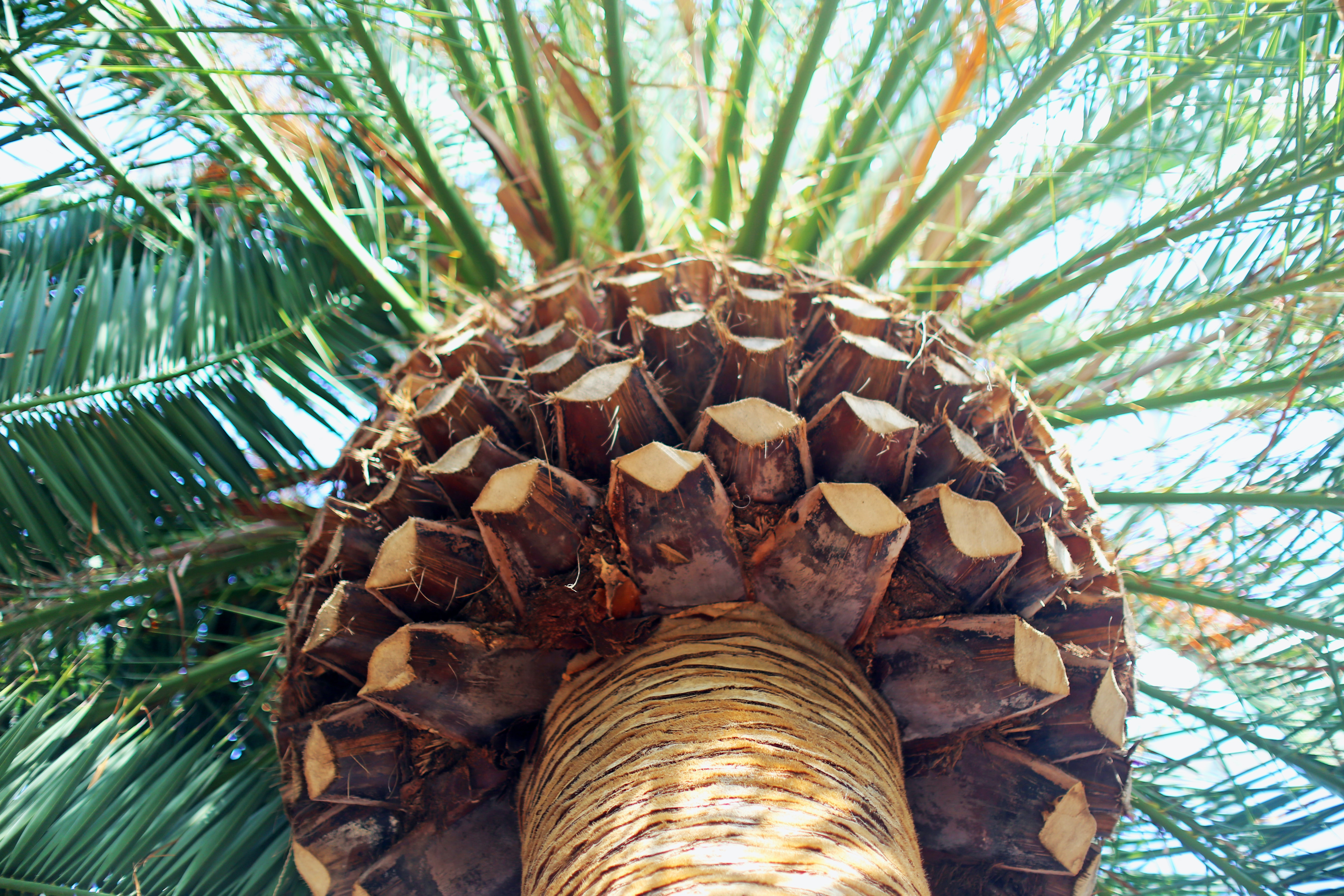 worm's eye view of palm tree