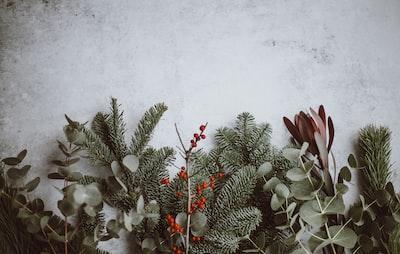 Christmas background - pine, eucalyptus, berries