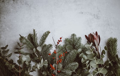 photo of green leafed plants xmas zoom background
