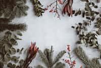 ☃️                  Christmas Song                                 christmas-poetry-2020 stories