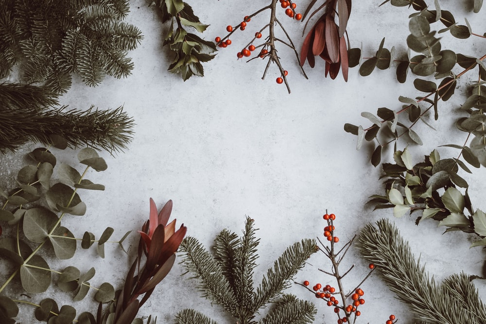 Christmas Holiday Background Photograph By Anna Om: Pine, Eucalyptus, Berries Photo By