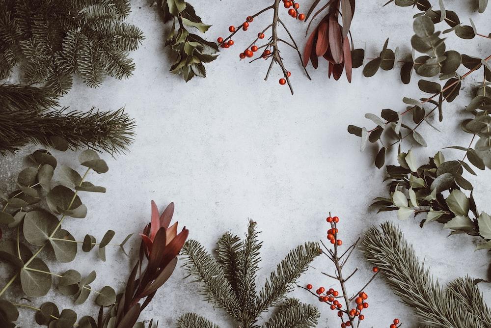 Pine, Eucalyptus, Berries Photo By