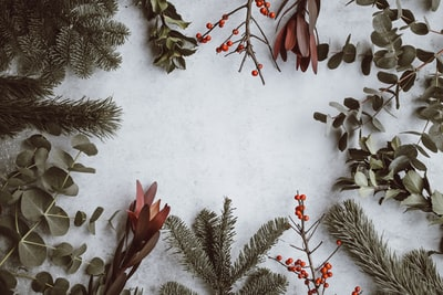 assorted-type of leaves lying on white panel holiday teams background