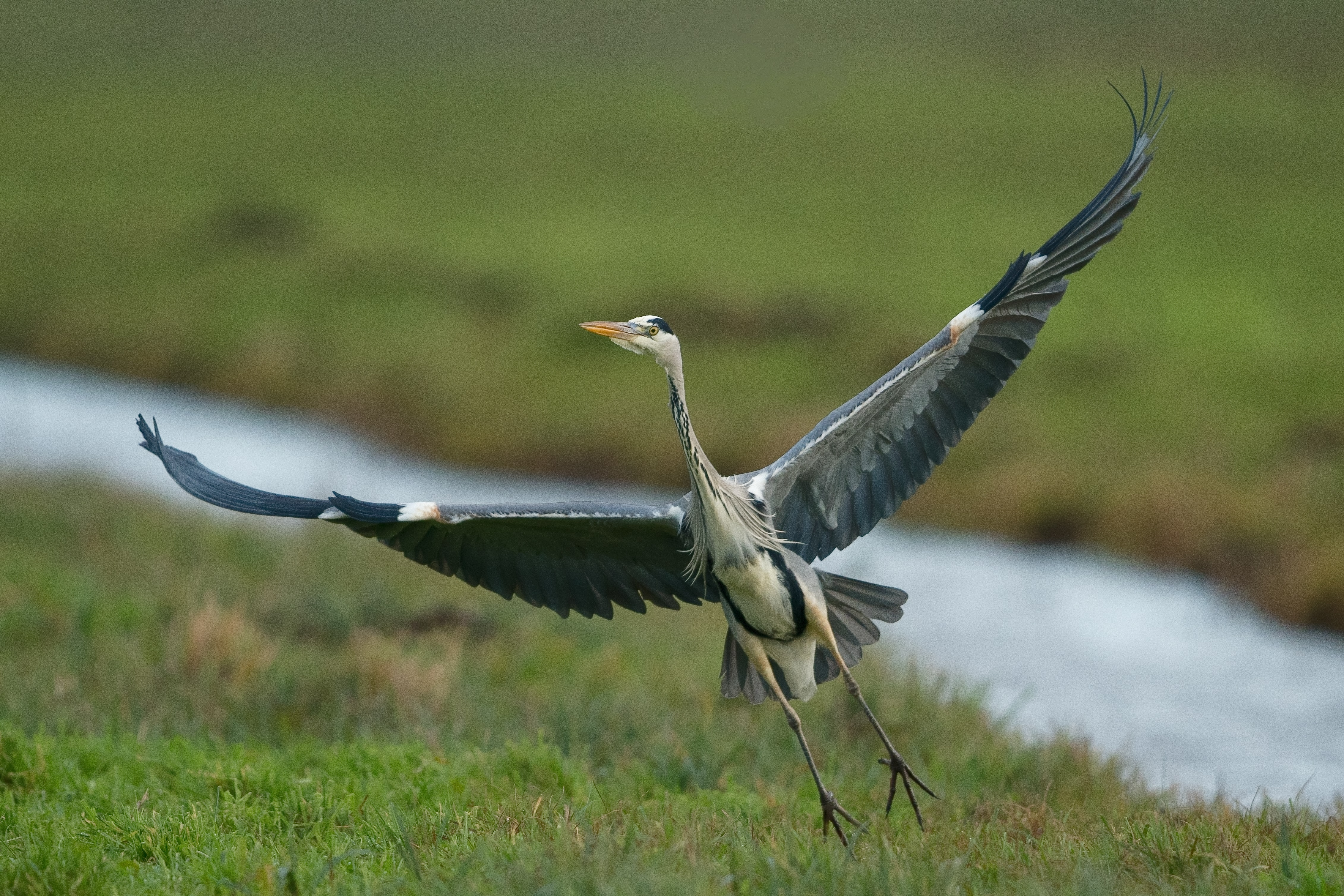 photography of bird about to flying