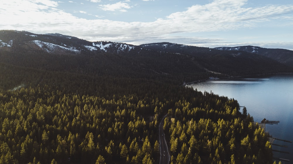 top view photography of trees near body of water