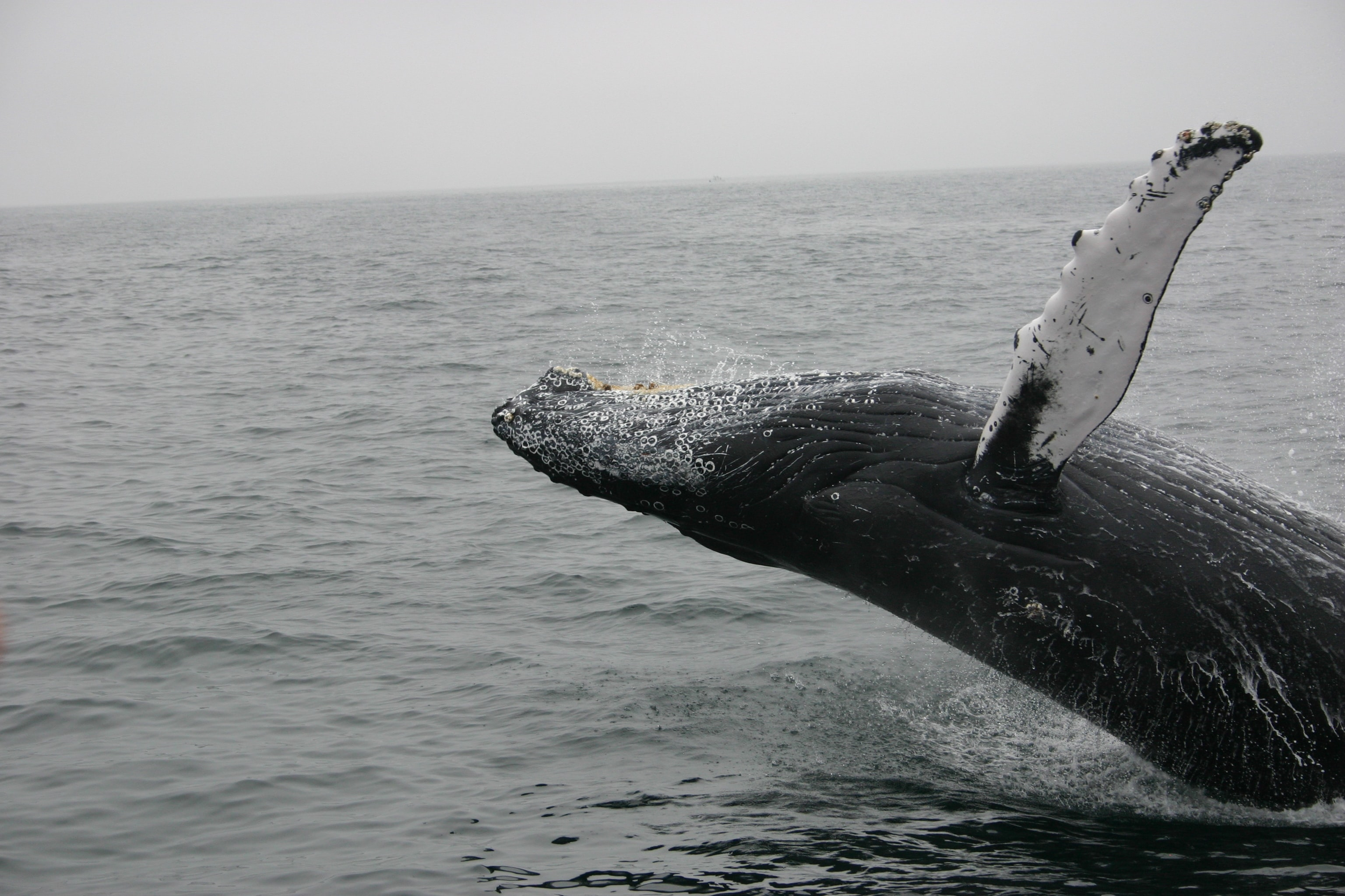 photo of whale