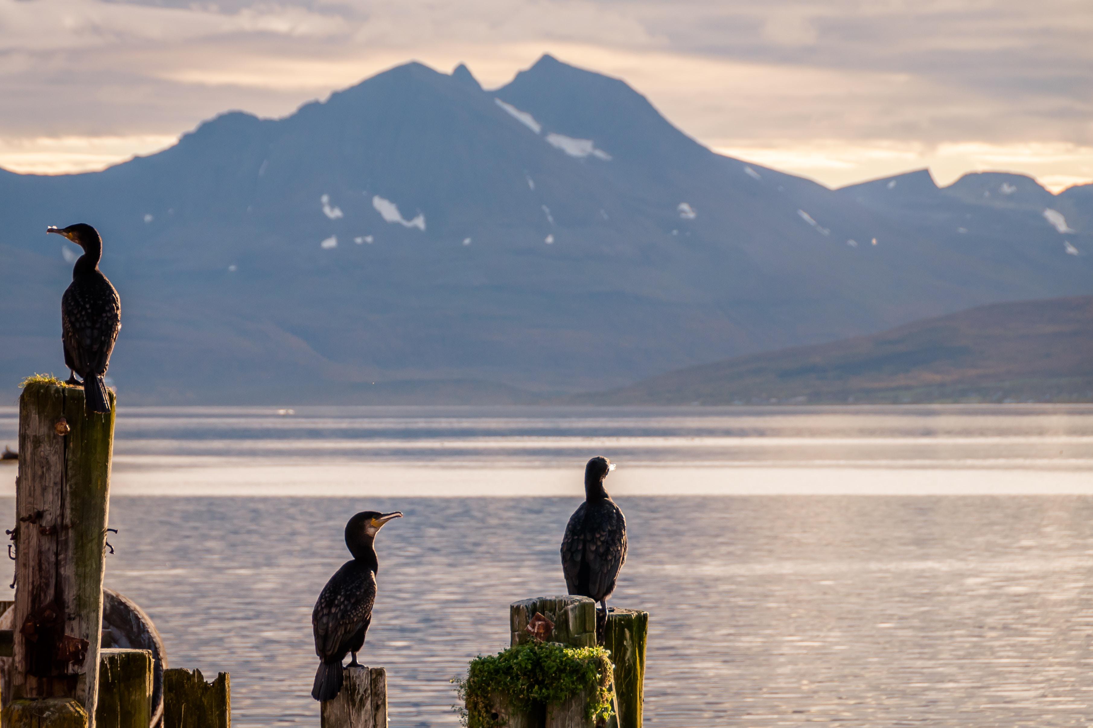 three birds on wood posts during daytime