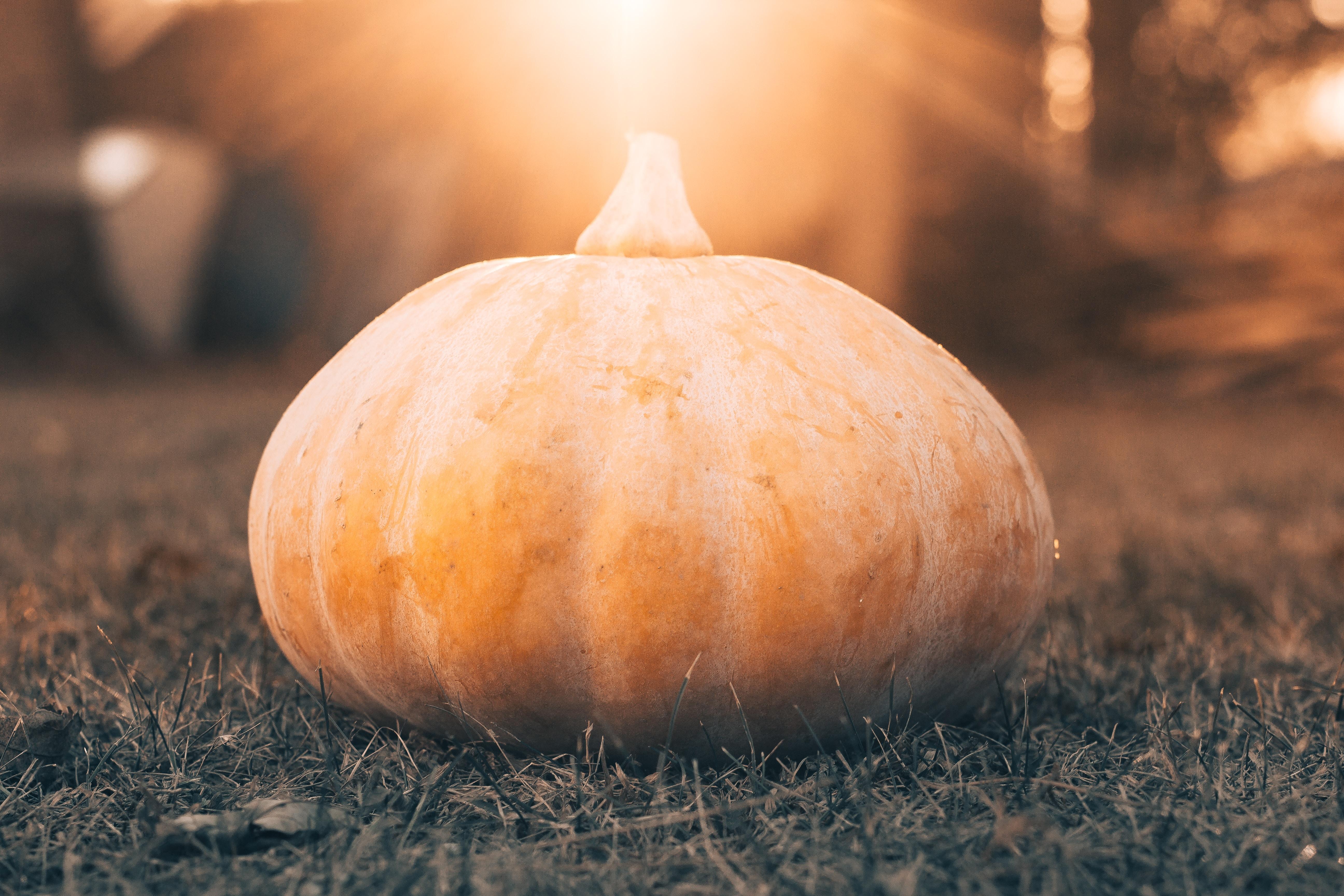 closeup photo of pumpkin