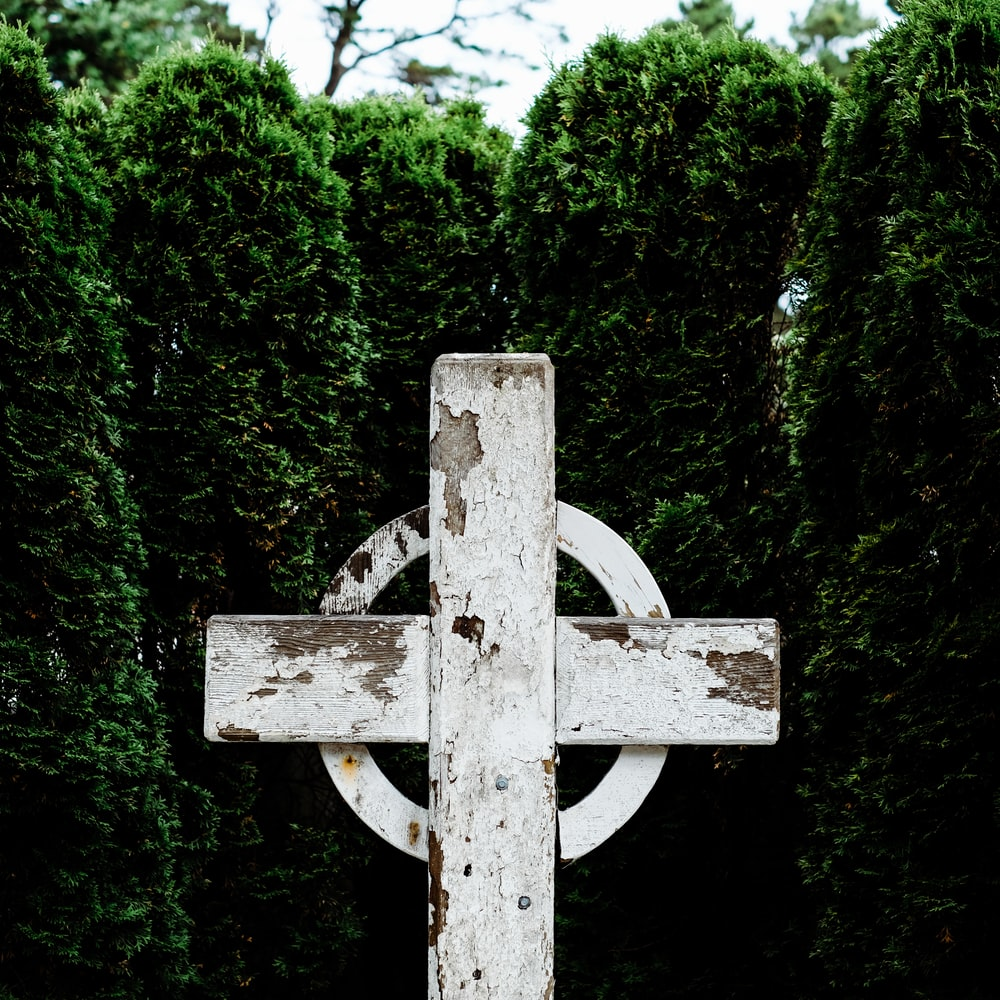white wooden celtic cross near green leafed plants at daytime