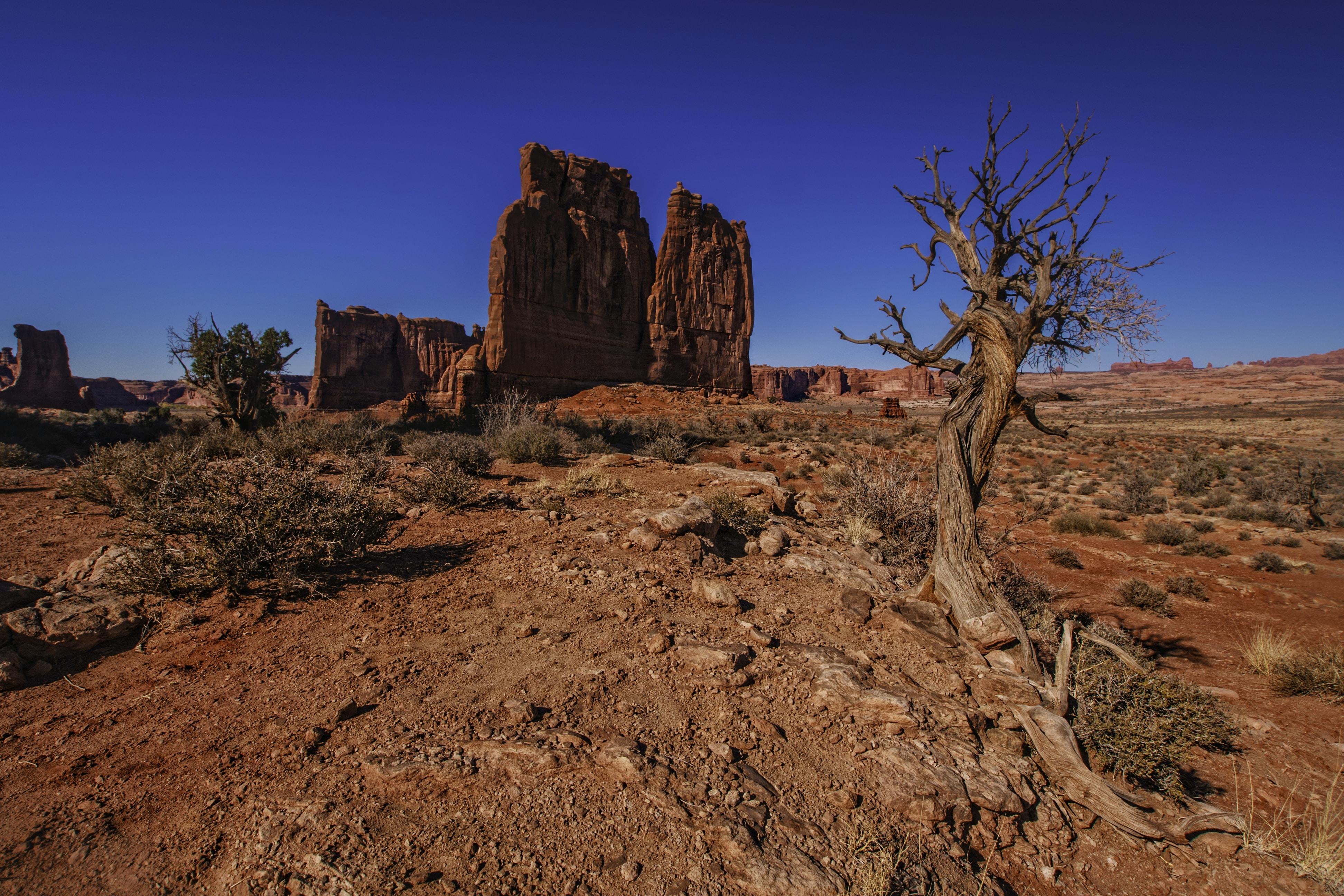 base tree near rock under blue sky at daytime