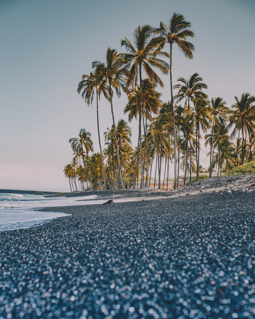trees near coastline
