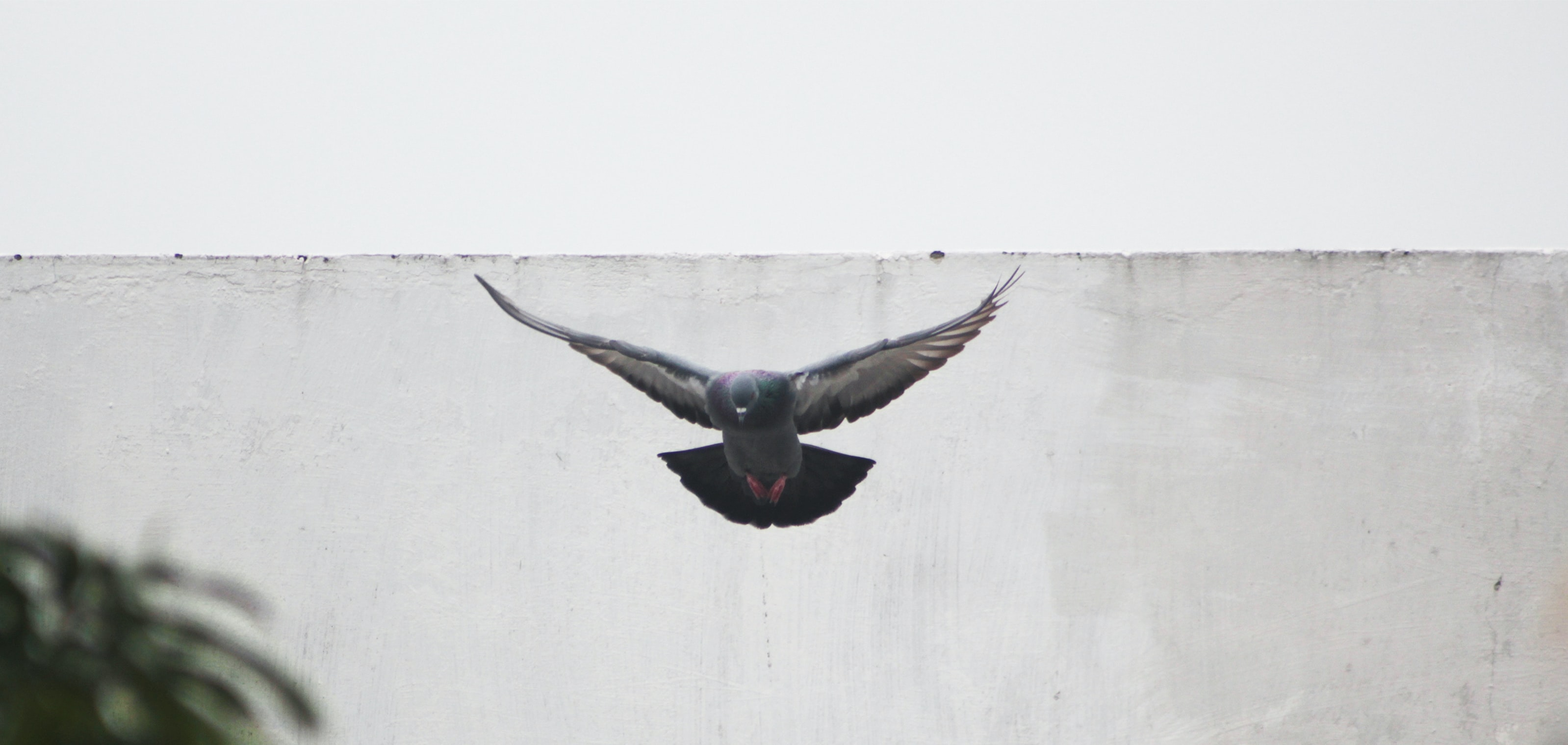 gray bird flying near gray concrete wall