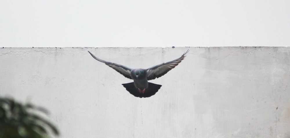 gray bird flying near gray concrete wall