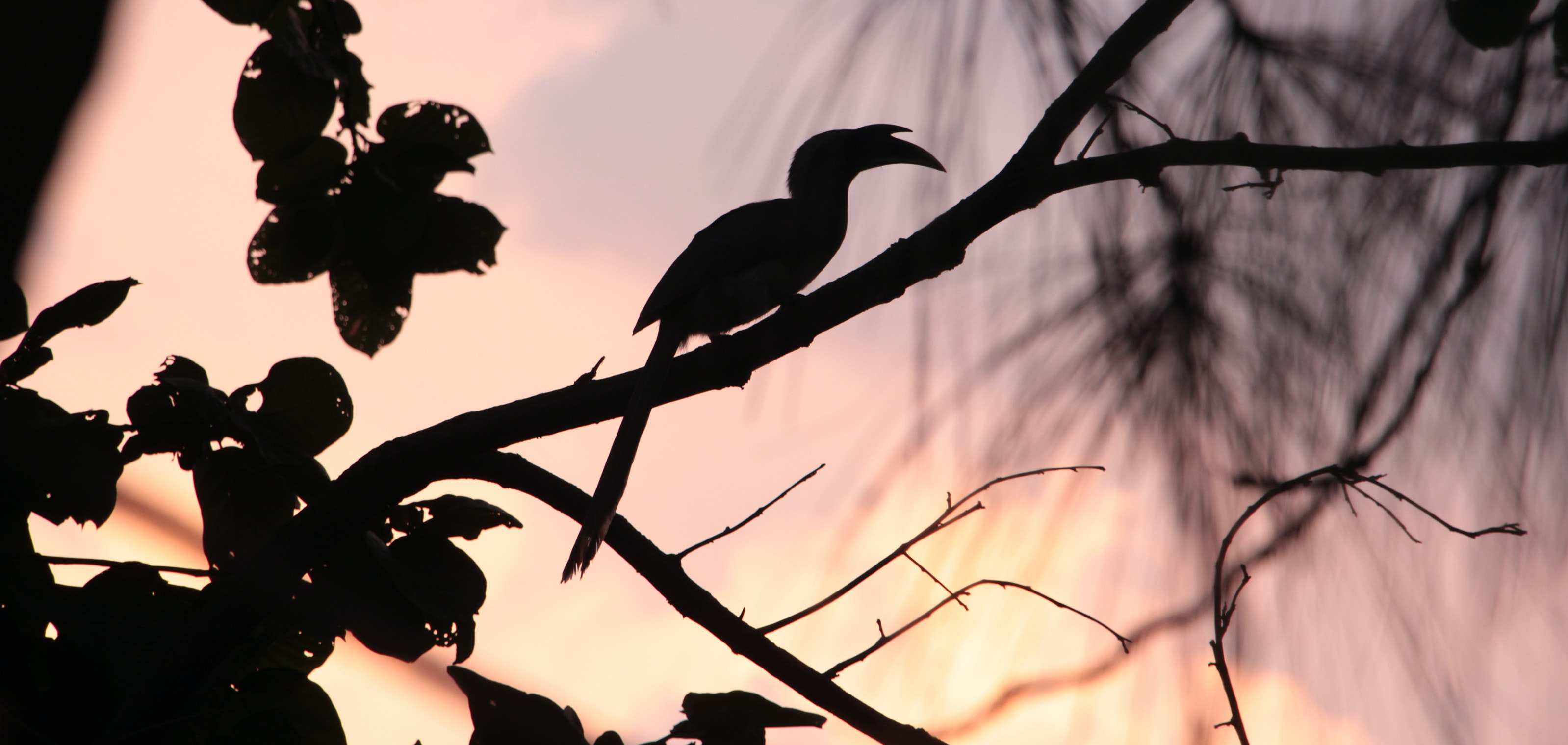 silhouette of bird on branch of tree