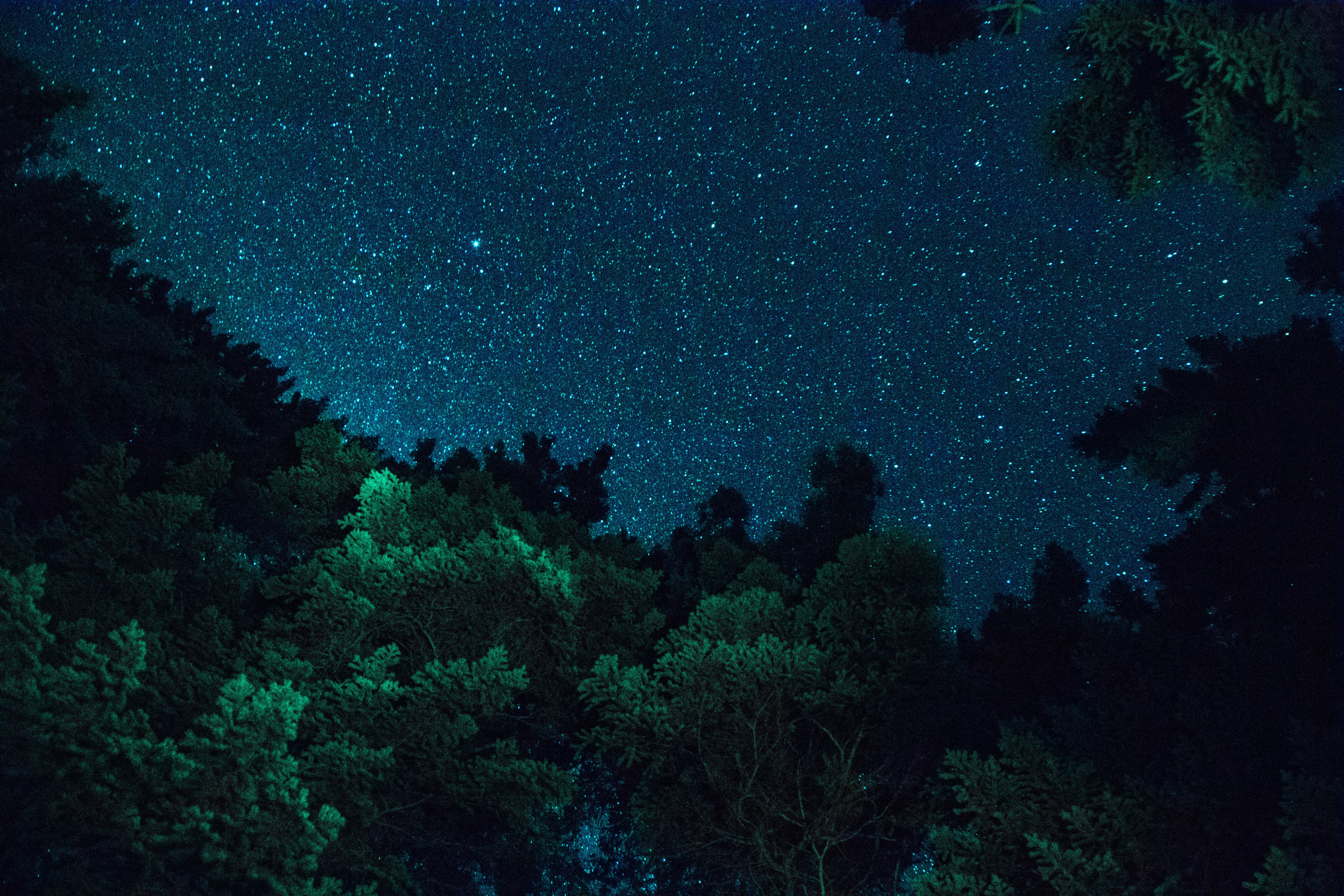 green leafed trees under black sky