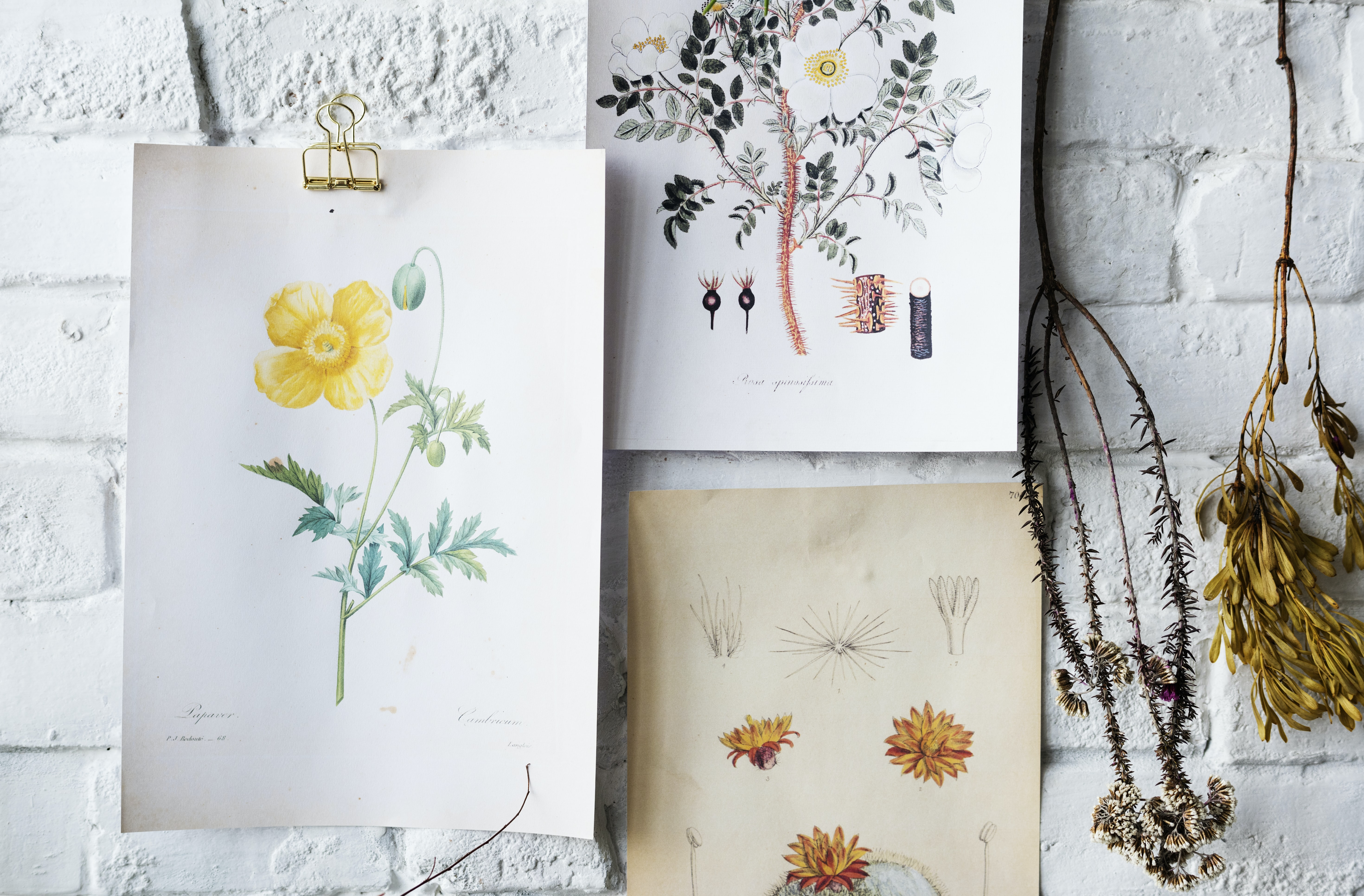assorted flowers painting