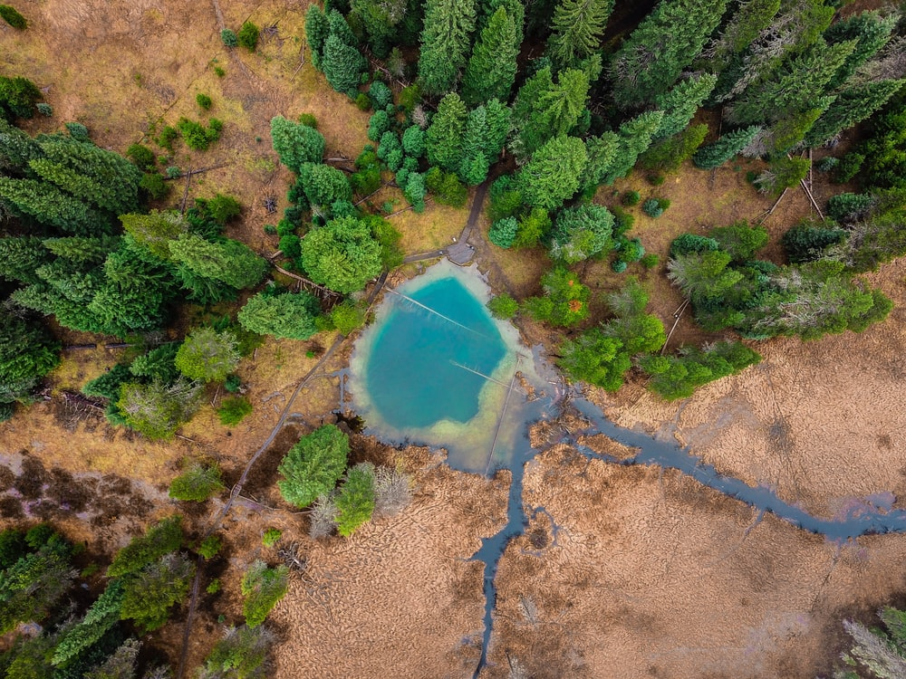 aerial photograph of pond between trees