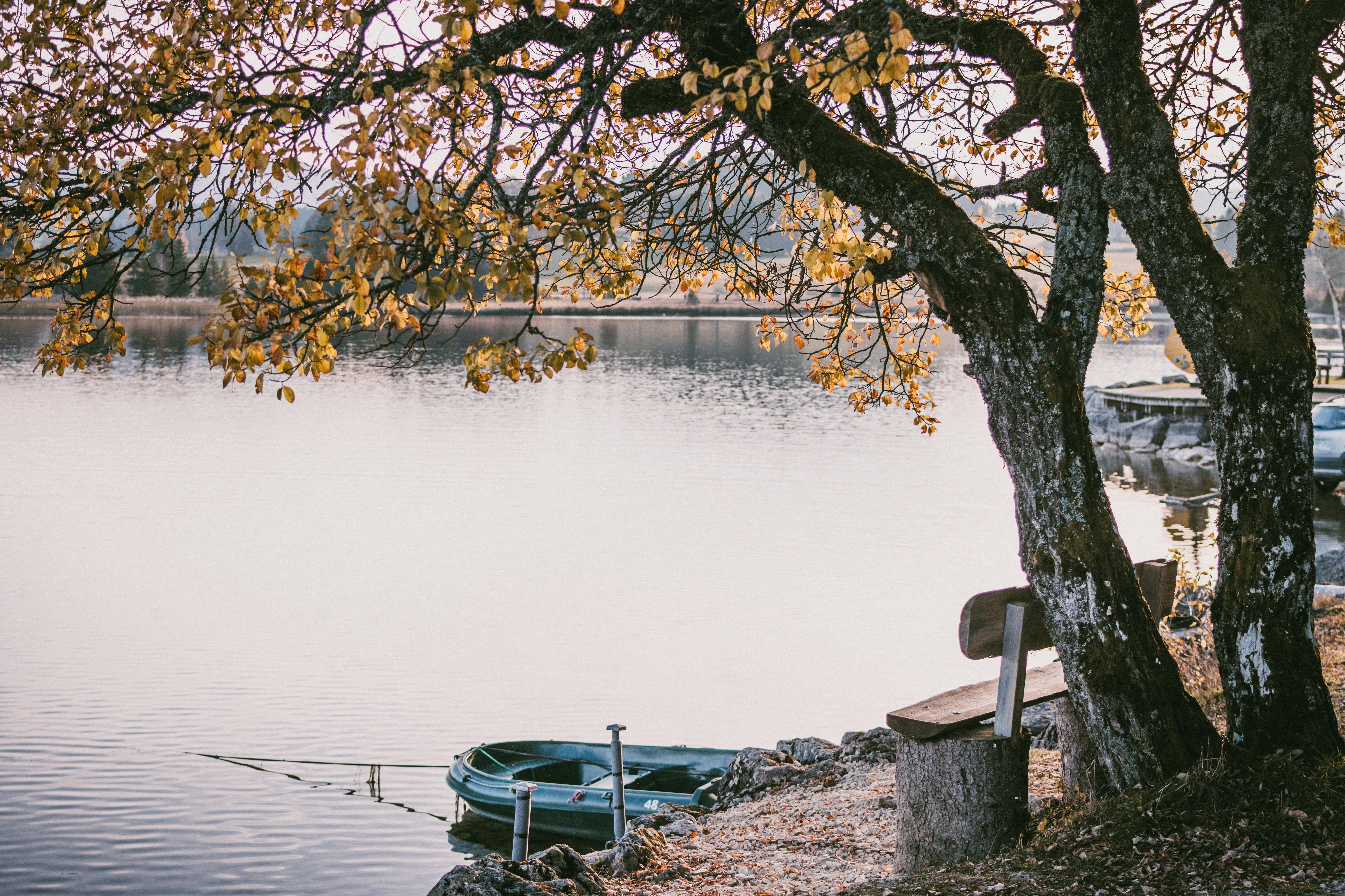 inflatable raft near wooden bench and tree