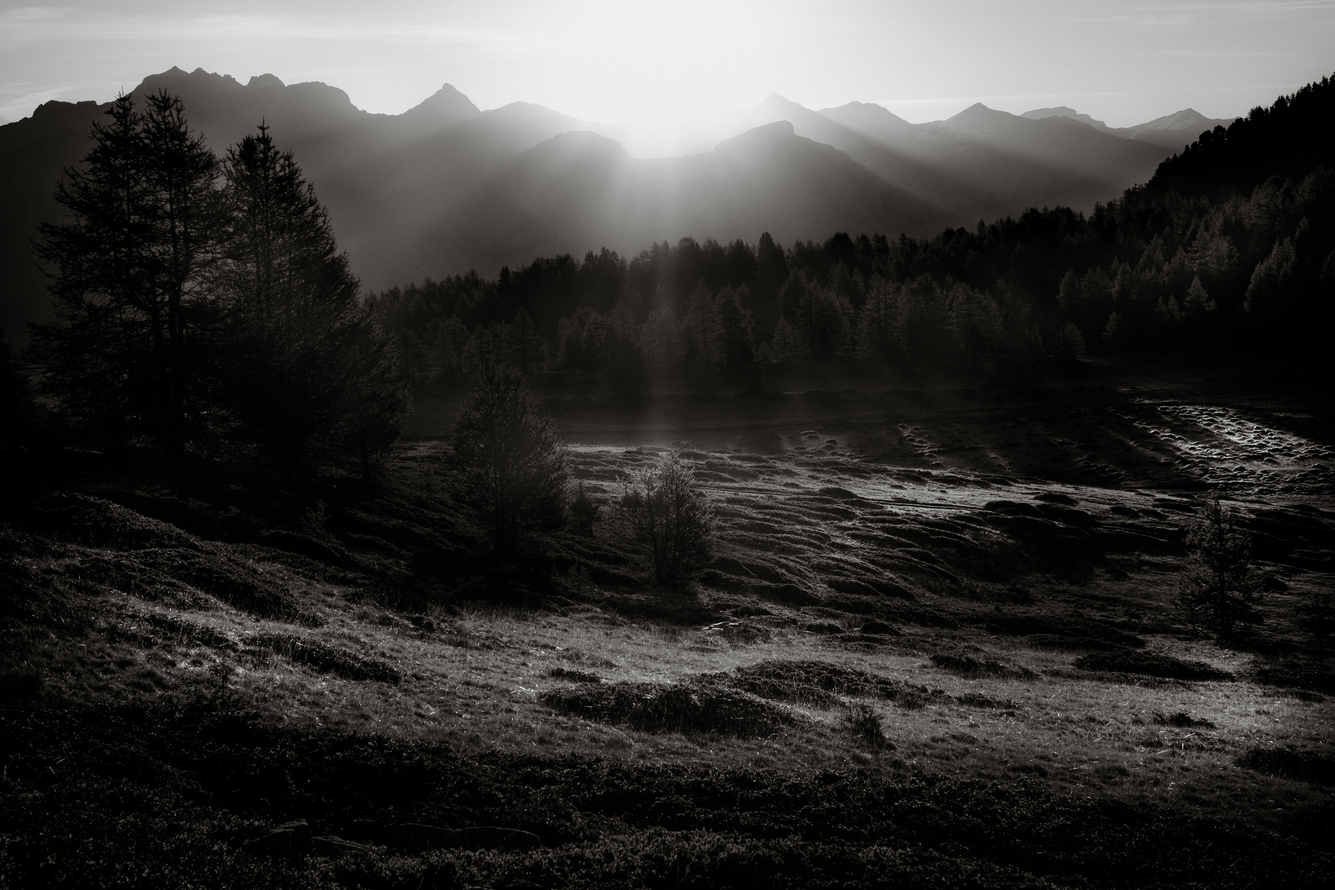 grayscale photography of trees near mountains