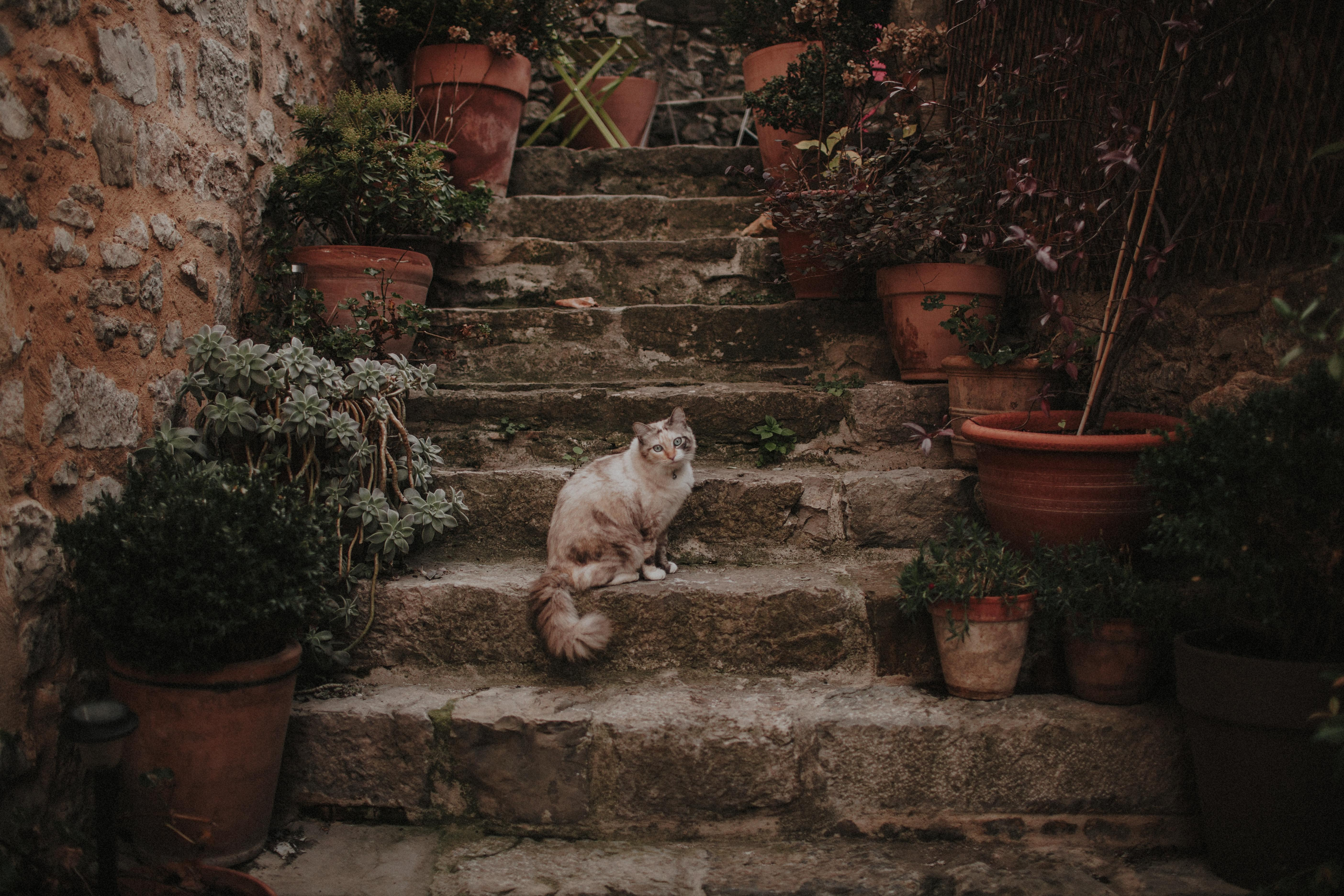 cat sitting on concrete stairs