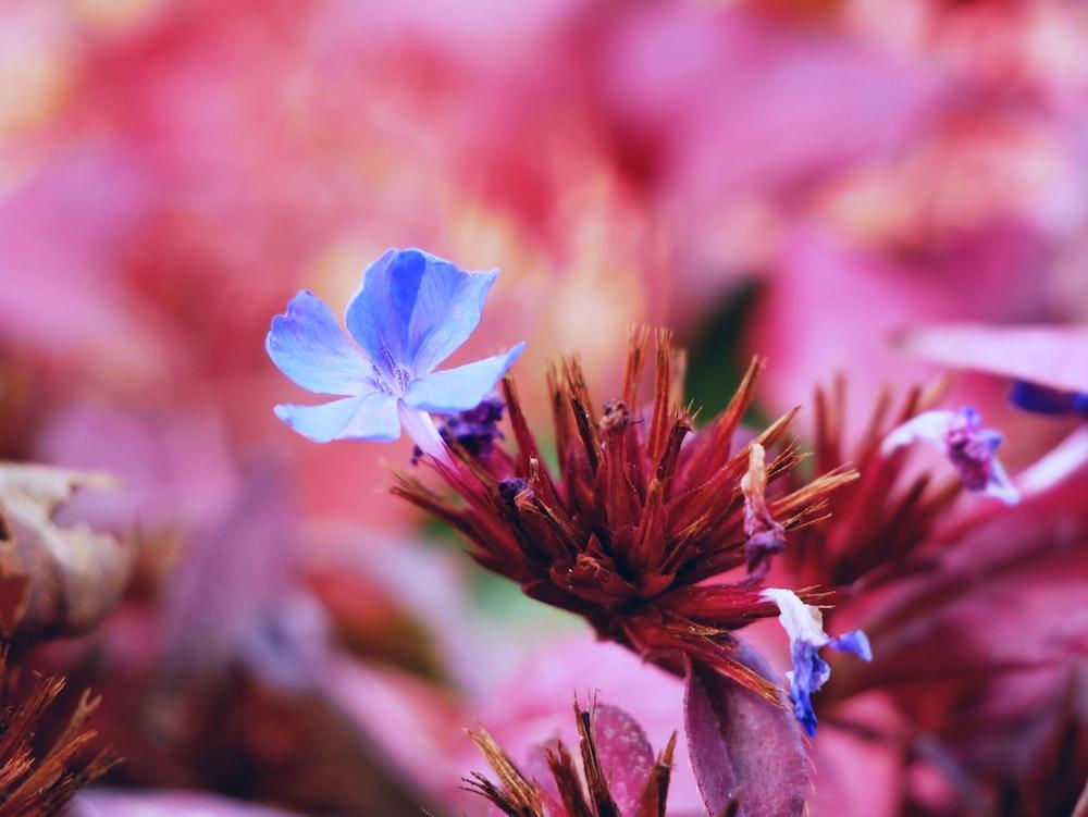 purple 5-petaled flower