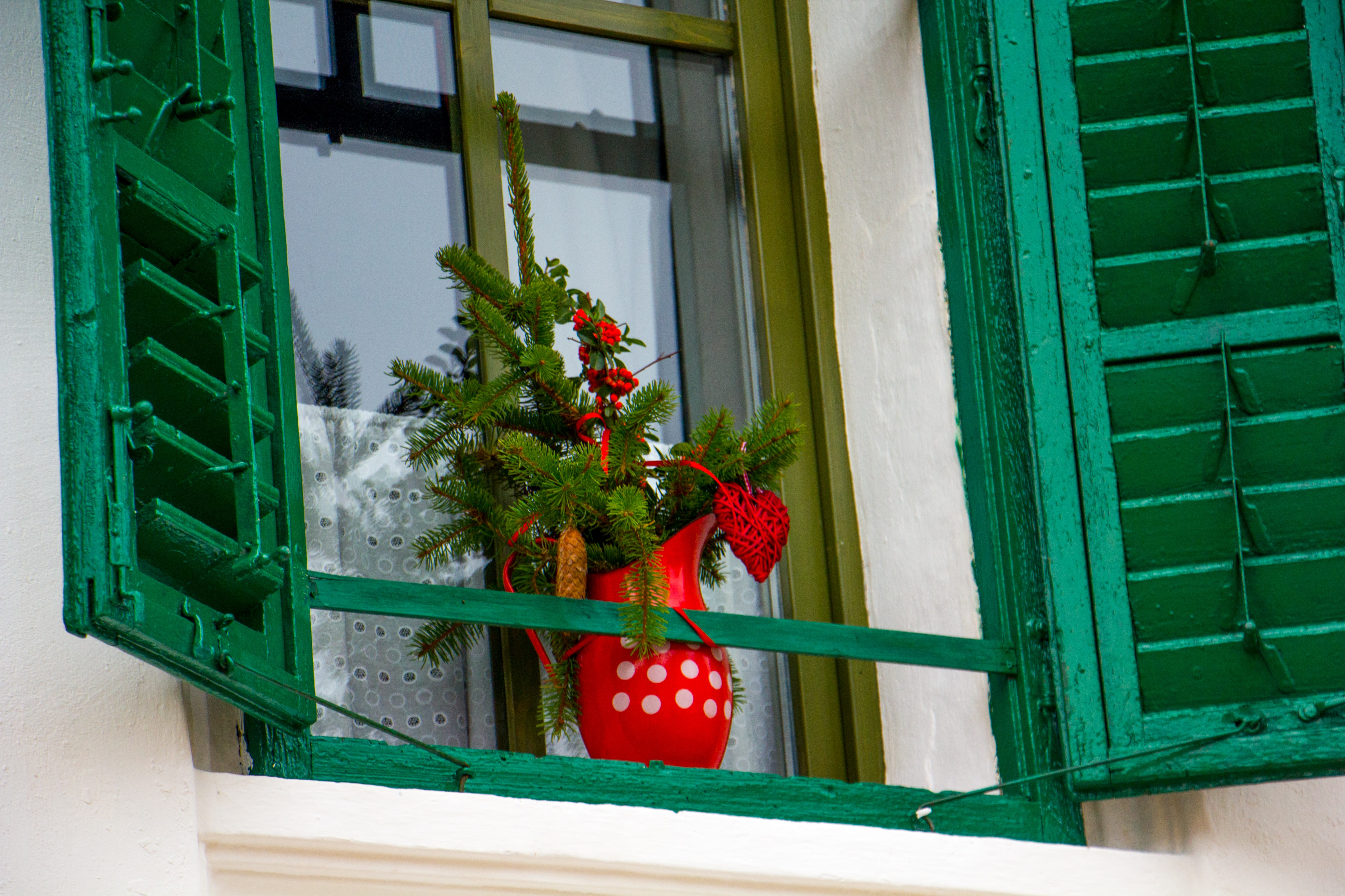 green leafed plant in red vase across window