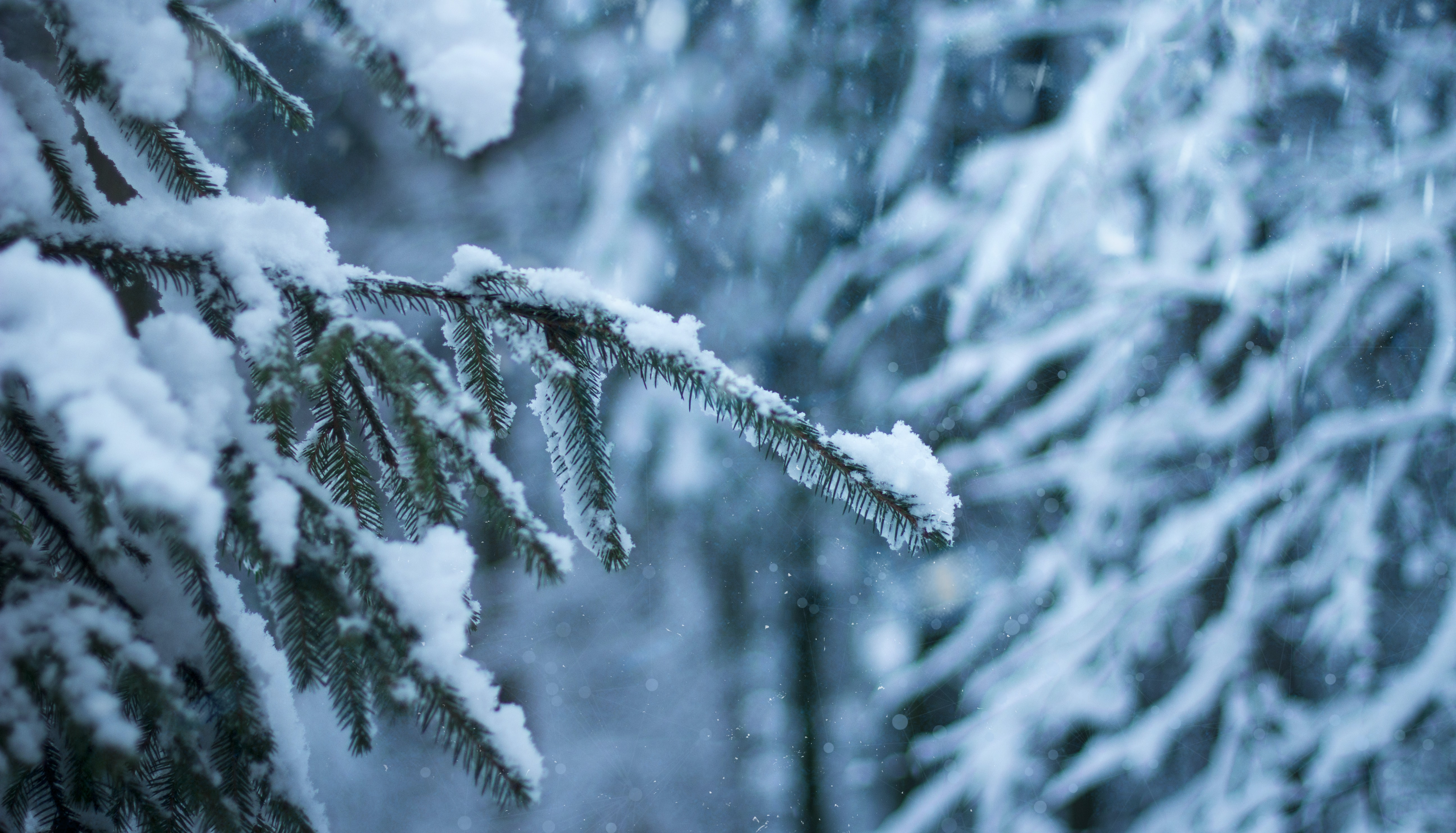snow covered pine tree in selective focus photographyt