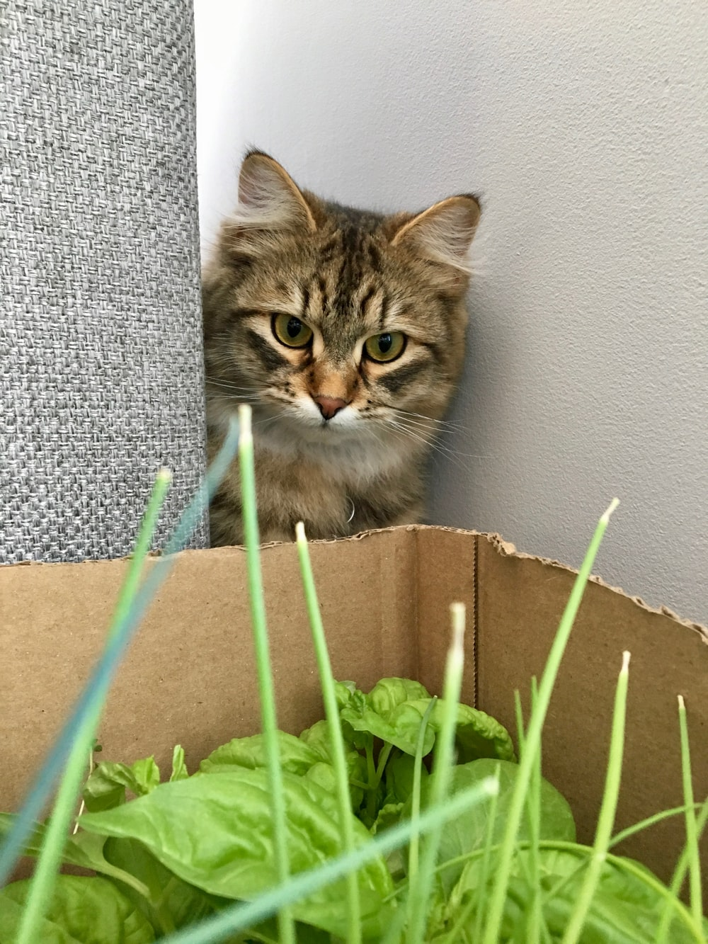 brown tabby cat looking at green leafed plants