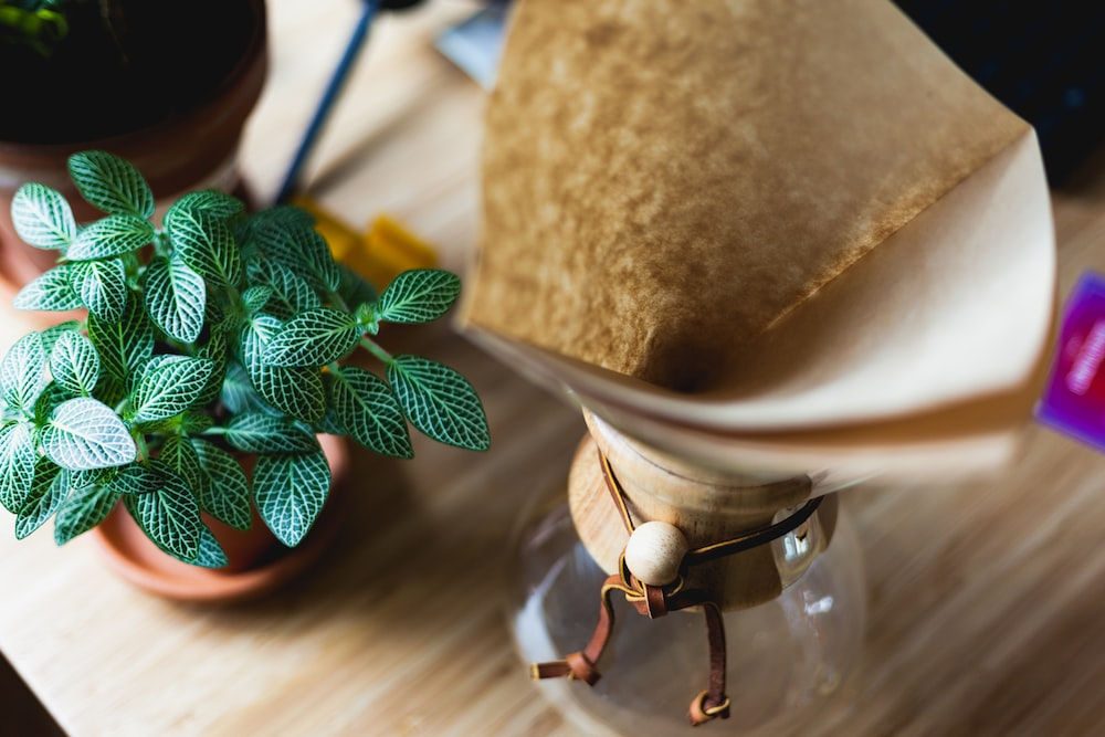 potted plant near glass vase