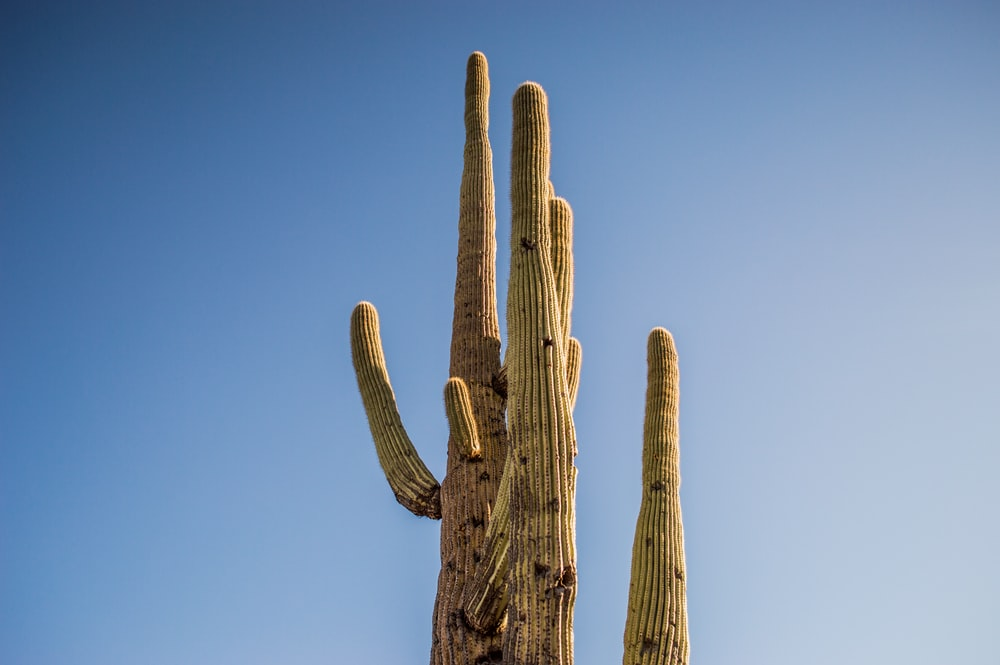 photo of cactus plant during daytime