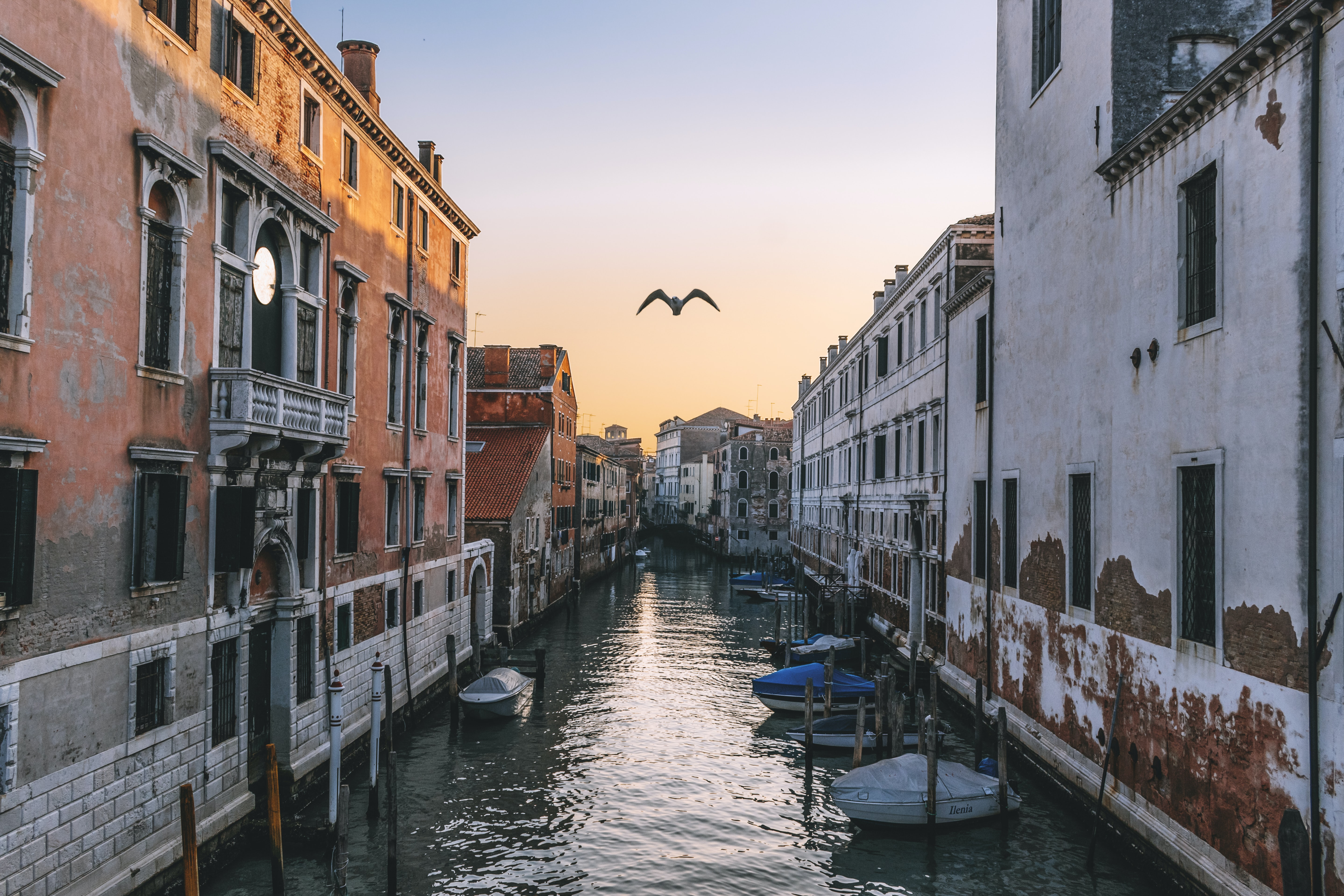 flying bird on Venice canal