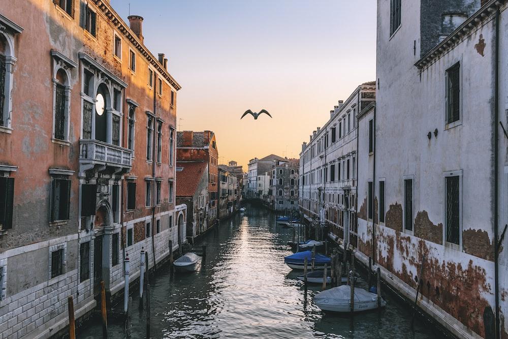 flying bird on Venice canal