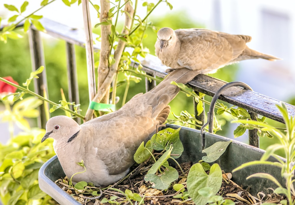 two brown birds on green plant
