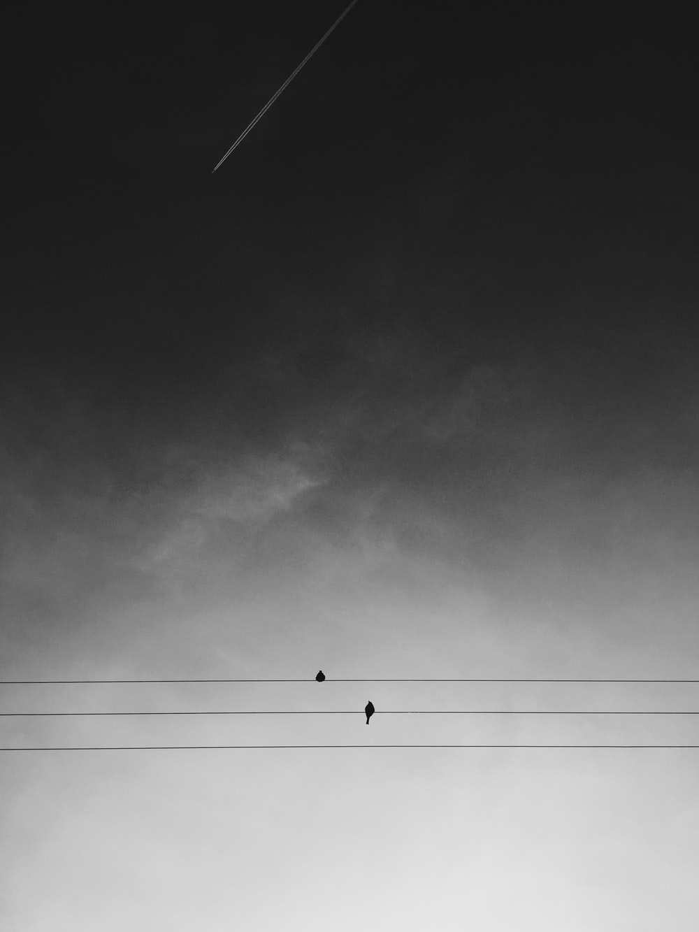 two black birds on electric wires under gray sky during daytime