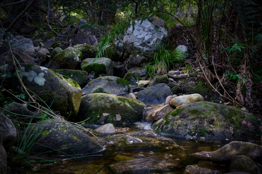 gray stones with moss near river and trees