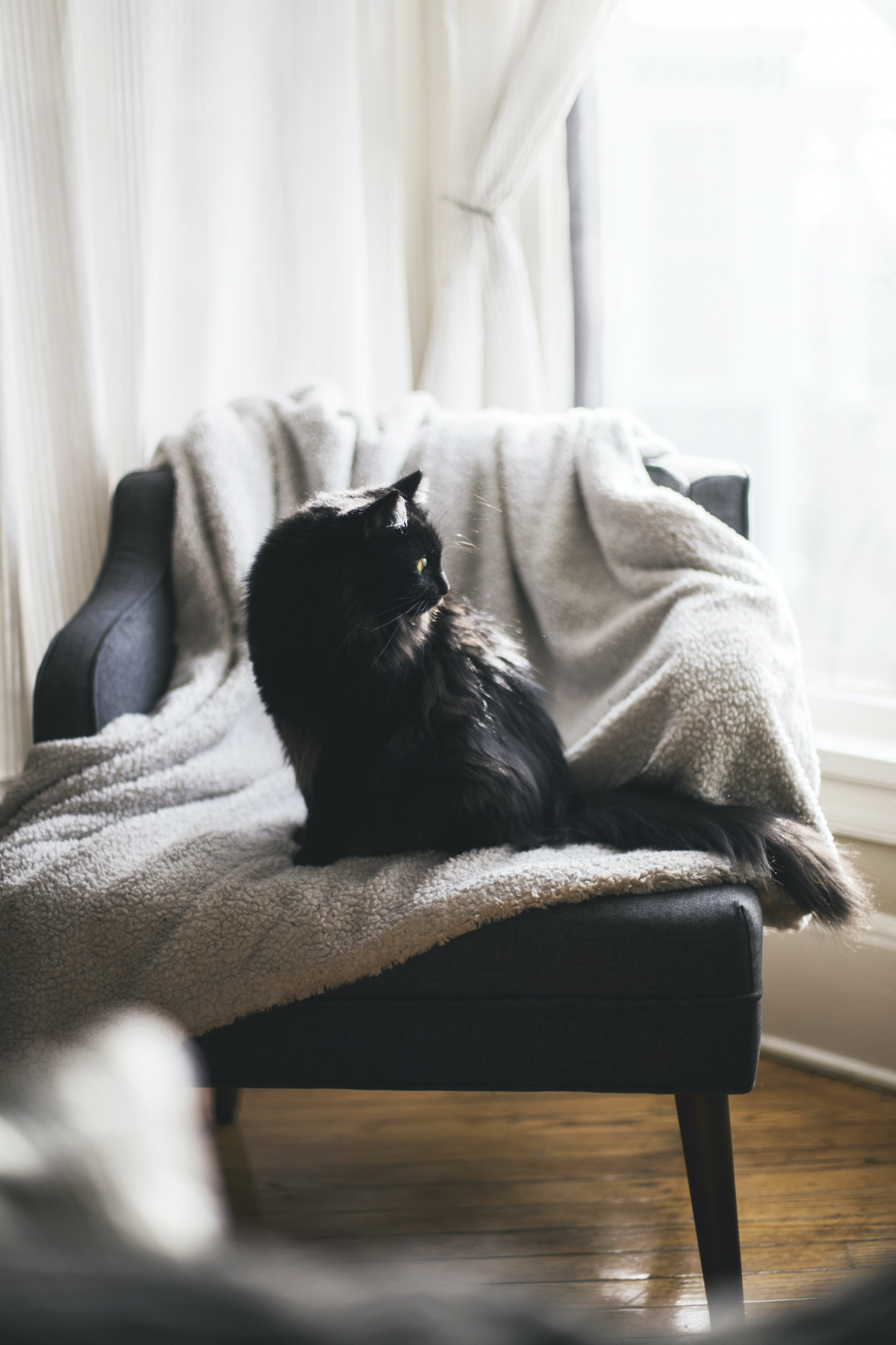 black cat on gray textile over black chair