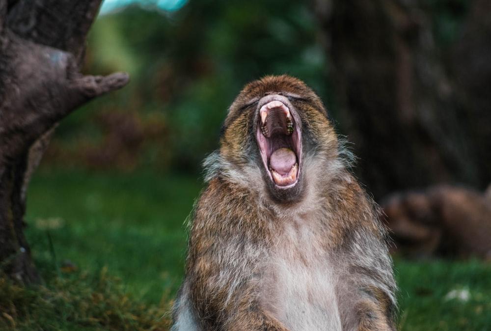 wildlife photography of monkey near tree trunk