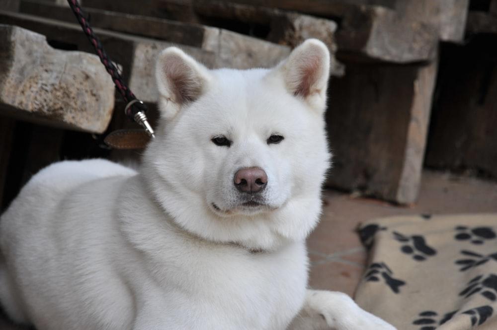 shallow focus of white dog
