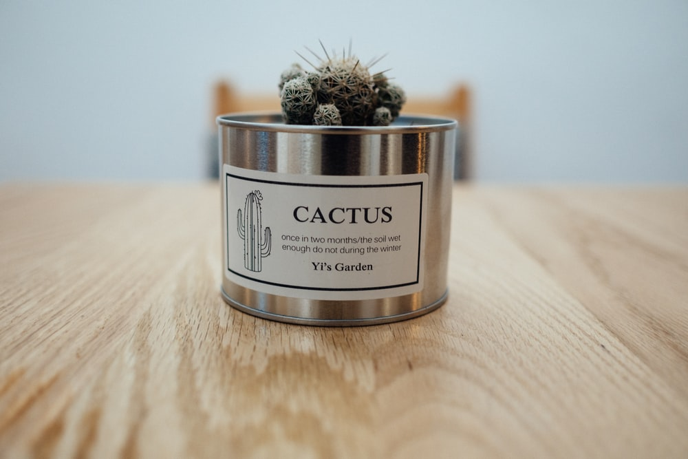 green cactus in stainless steel pot