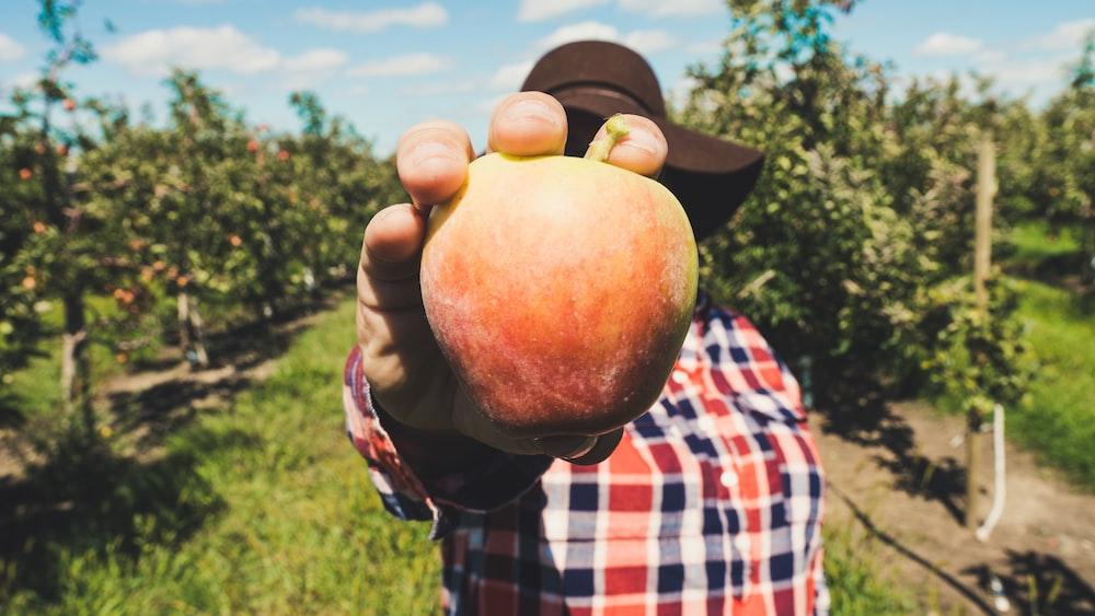 Persona con naranja manzana fruta tomada durante el día