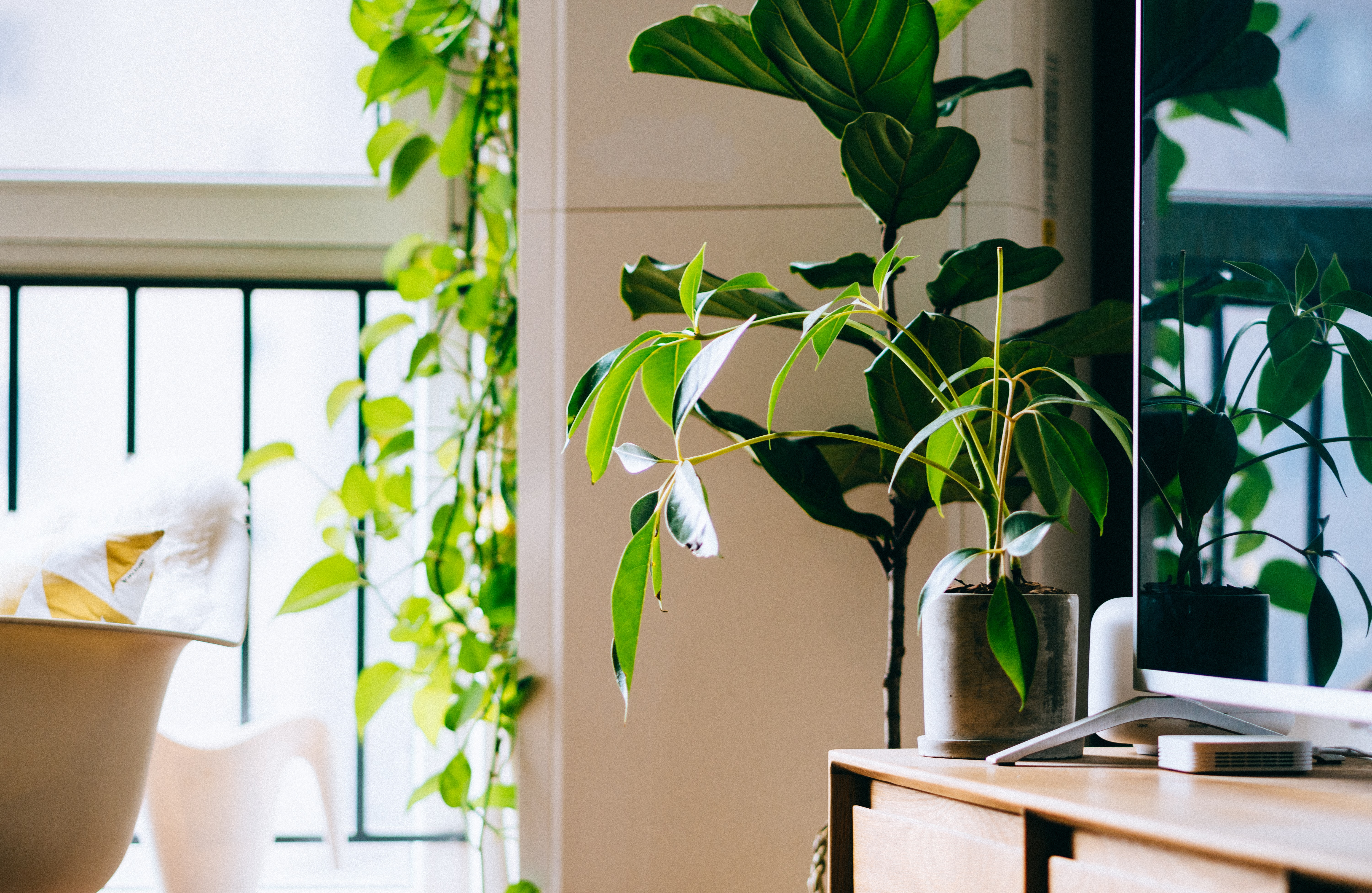green potted plant beside flat screen TV