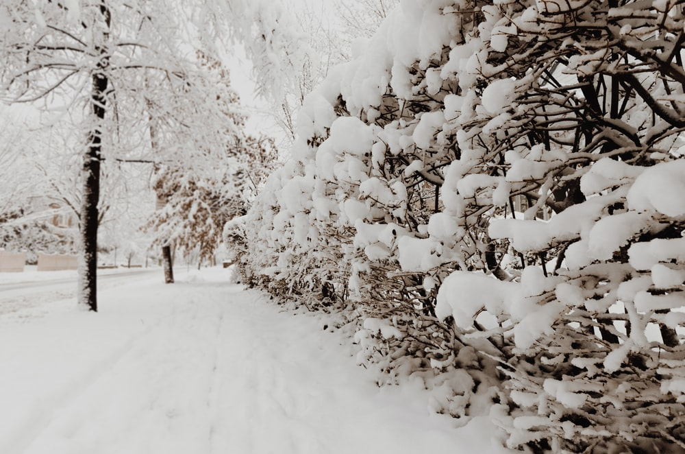 photography of plants and trees coated with snow