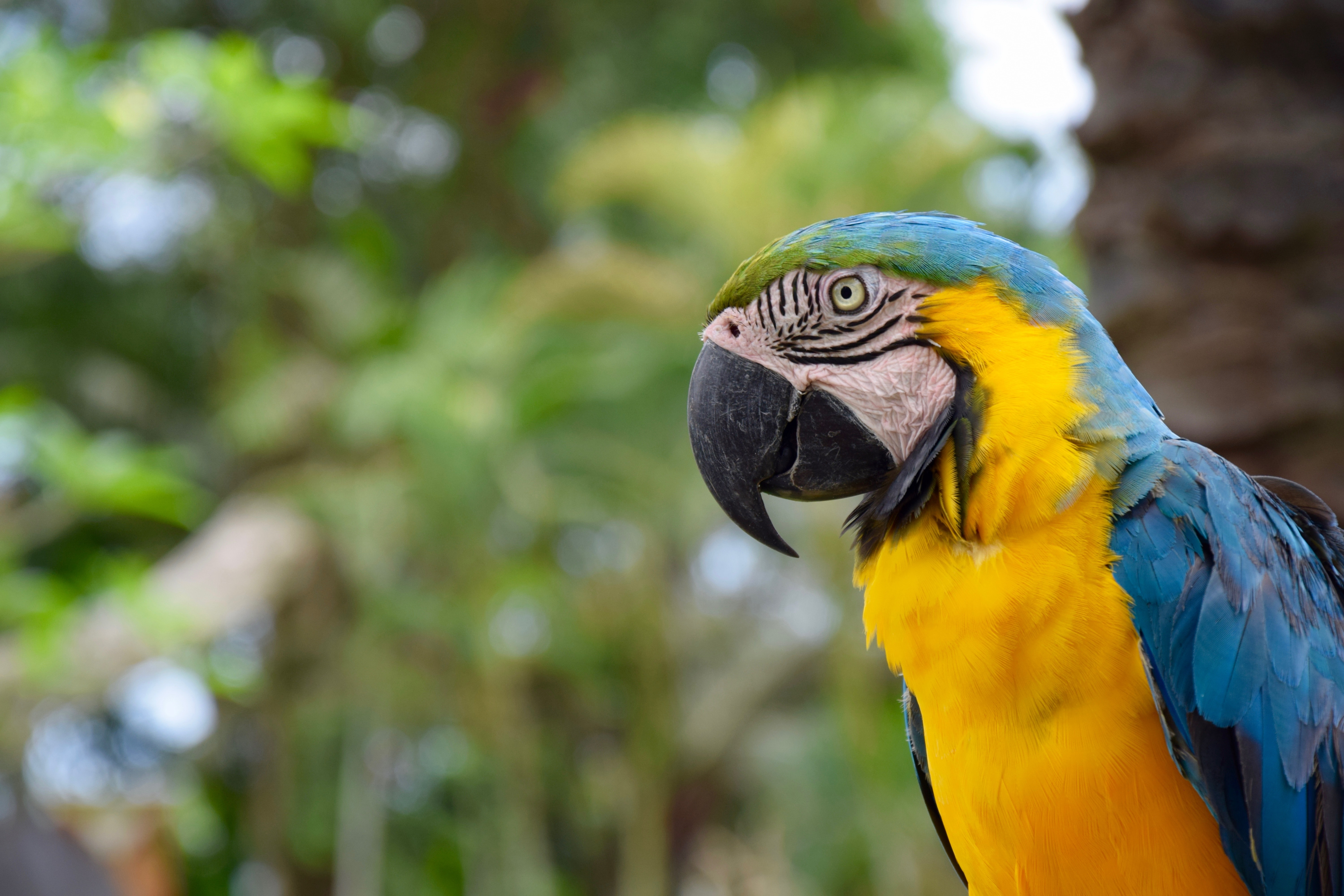 blue and yellow macaw standing near brown tree outdoor during daytime