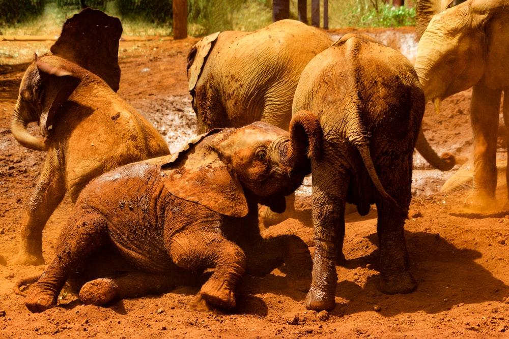 herd of baby elephants