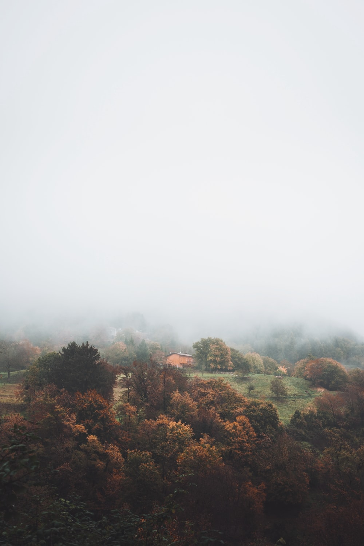 orange house in foggy woods