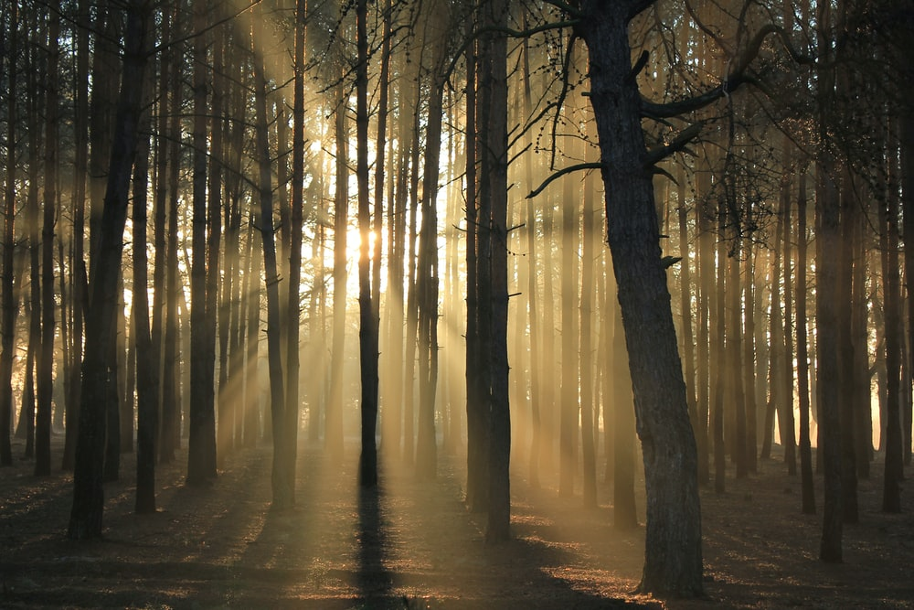 sun ray passing through forest