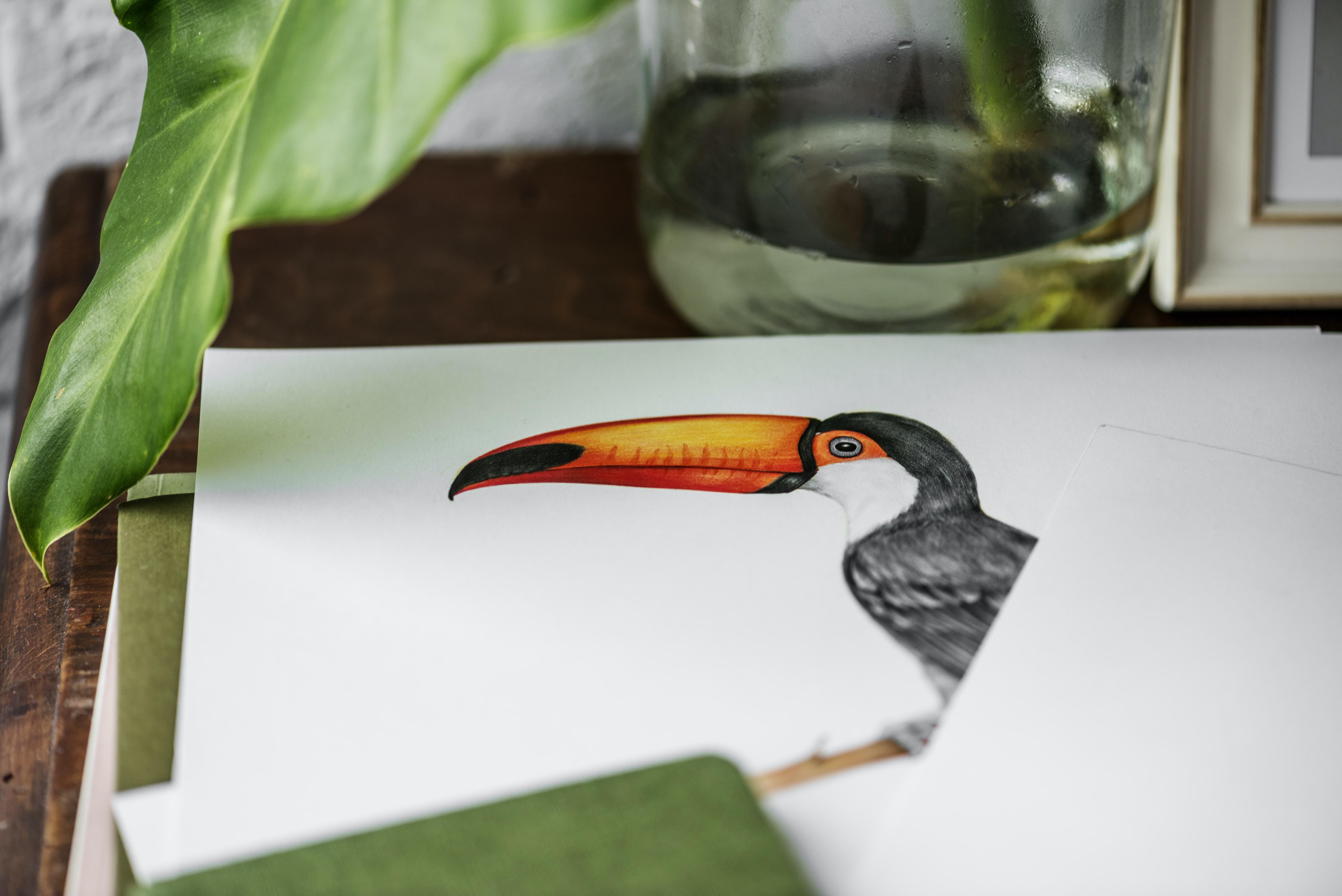drawing of bird